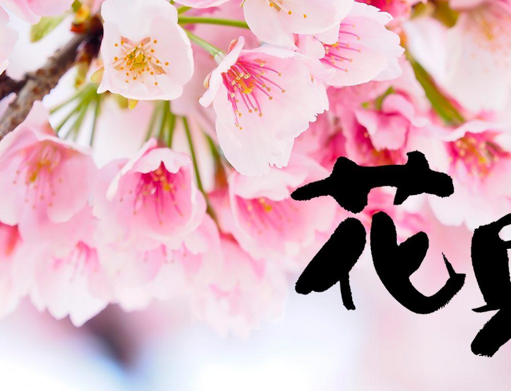春が来た!大花見大会です!
