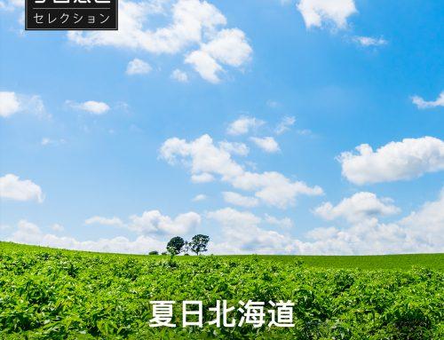 北海道の物産ストア「夏日北海道」を8月13日(火)よりオープン ~ 人気の特産品を集め、より豊富な品揃えを中国のお客様に提供 ~